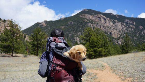 viajar-con-mascota-a-irlanda